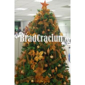 "Brad de Craciun 210 cm ""miere de camp"""