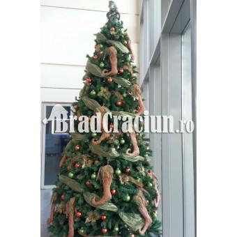 "Brad de Craciun 340 cm -""cizmulite de craciun"""