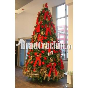 """Brad de Craciun 450 cm """"fundite si reni"""""""
