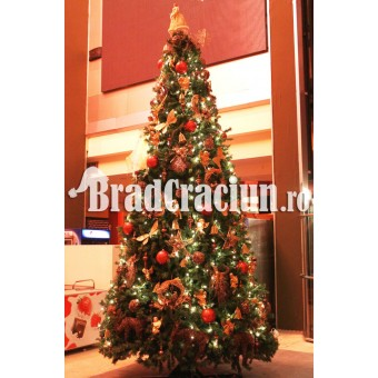 "Brad de Craciun 450 cm  ""iarna rustica"""