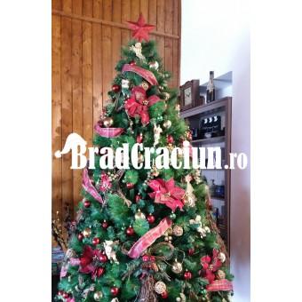 """Brad de Craciun 270 cm """"steaua craciunului rustic 1"""""""