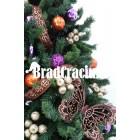 "Brad de Craciun 270 cm ""aroma de portocale"""
